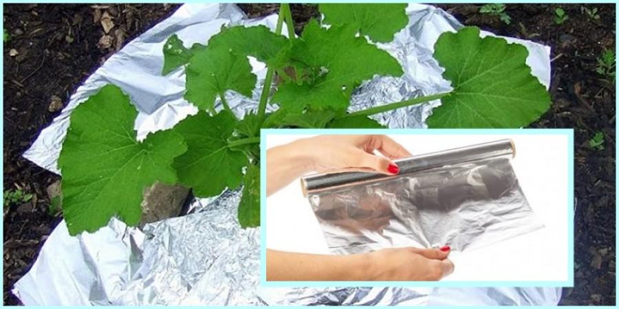 Így használd az alufóliát a kertedben!