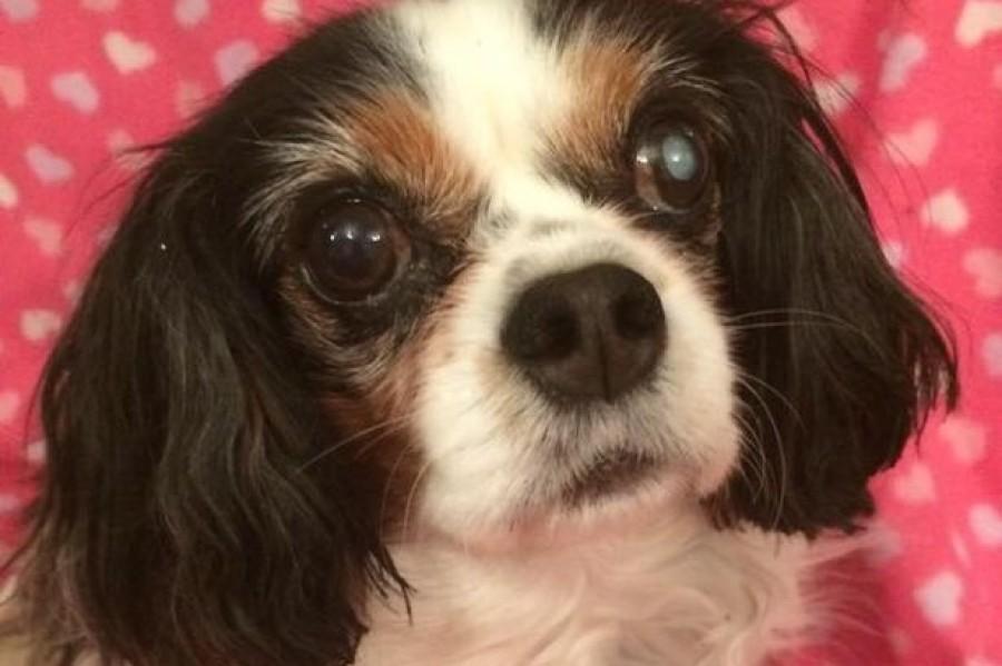 Lucy kutyus szenvedése vethett véget az illegális állatkereskedelemnek