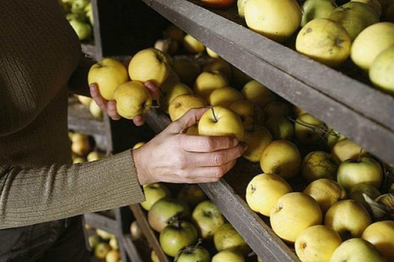 Ezért nem szabad az almát  zöldséggekkel együtt tárolni télire!