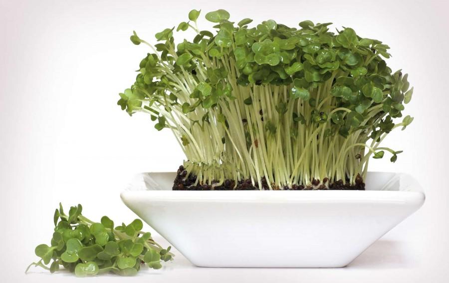 Két hét alatt nő meg ez a salátanövény! Még föld sem kell hozzá!