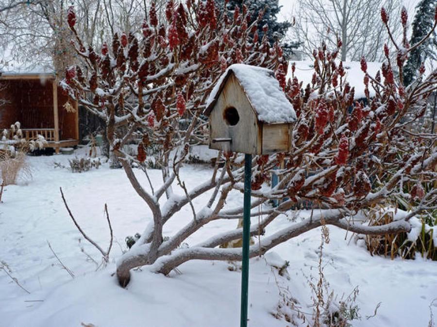 Télen is van tennivaló a kertben!