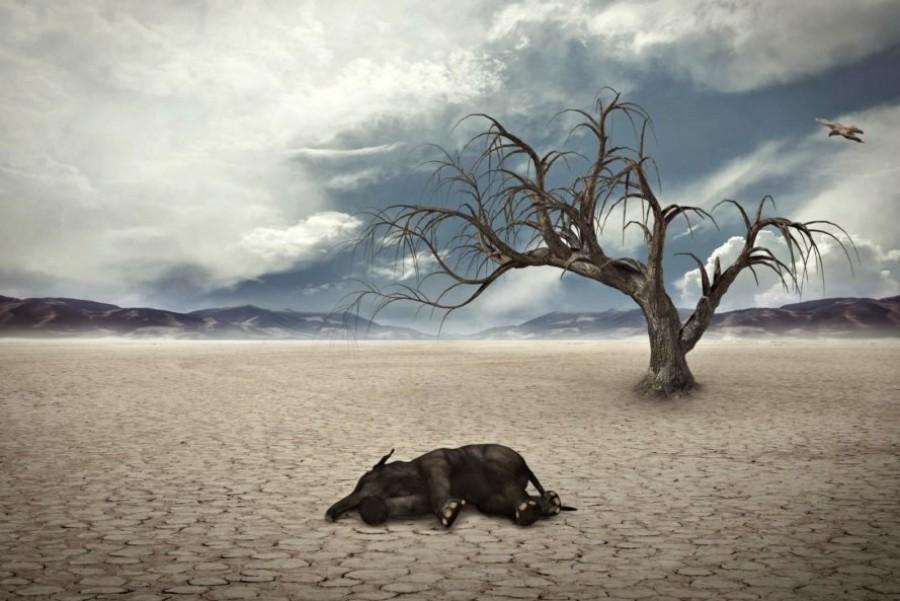 Drámai adatok: Több mint 1200 fajt fenyeget kihalás!