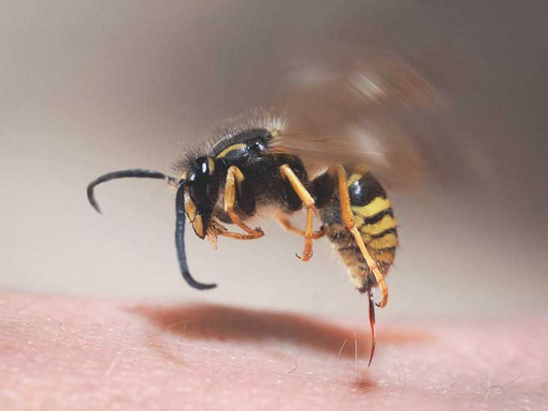 Ezt NE tedd, ha megcsípett a méh, vagy a dárázs!