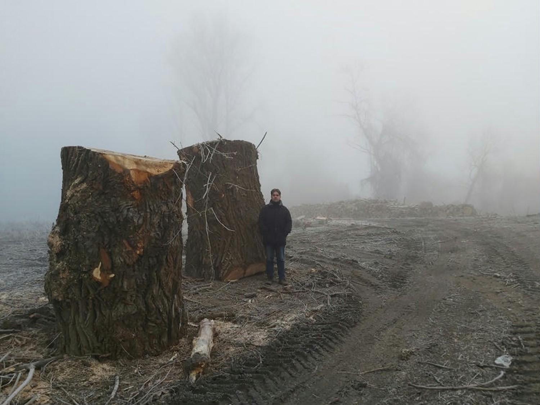 WWF: Védett erdőt pusztítottak el a Tiszánál a vízügy emberei