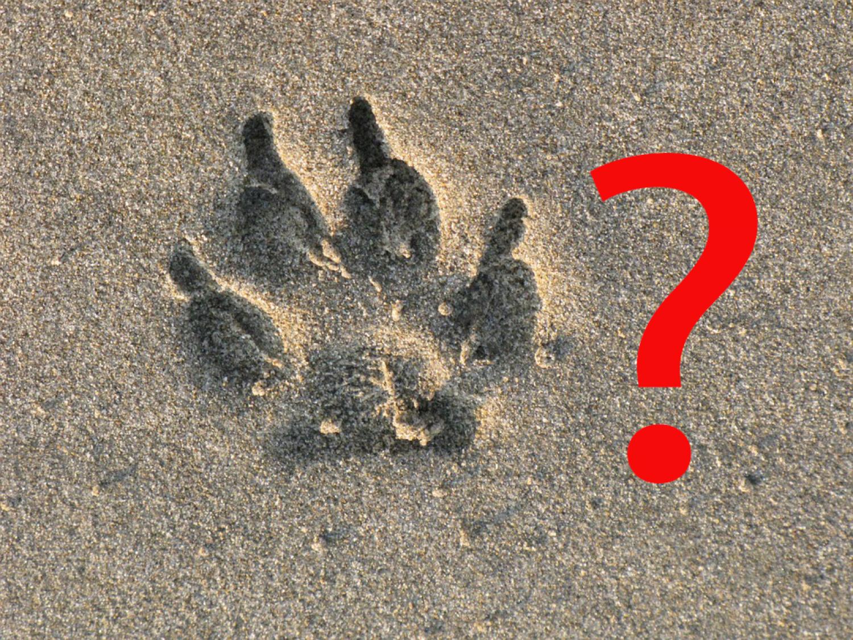 Felismered az állatokat a lábnyomuk alapján?