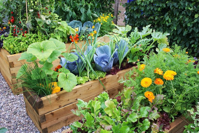Ezekkel a növényekkel messzire űzheted a kártevőket a kiskertedből!