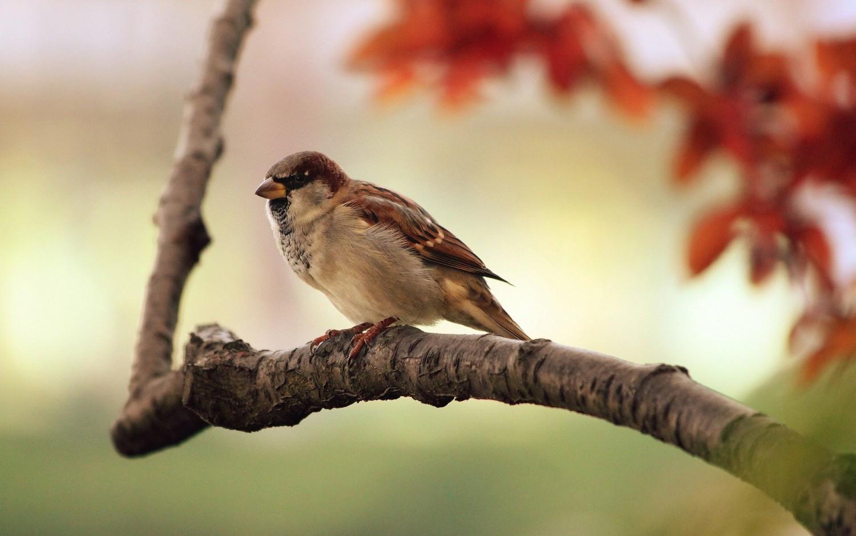 Mennyit ismersz fel a 10 madárból? A nevüket mindenki ismeri, de képről felismered-e őket?