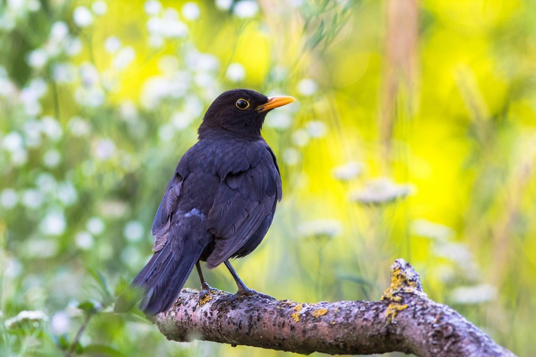 Nem árva, csak felnőtt – fészekhagyó madárfiókák