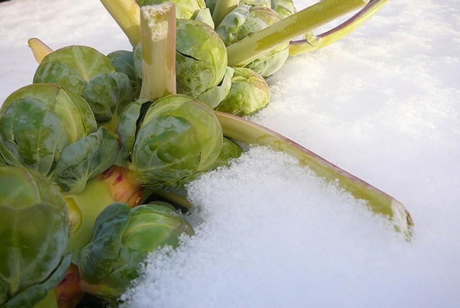 Ezeket a növényeket nyugodtan kint hagyhatod télen!