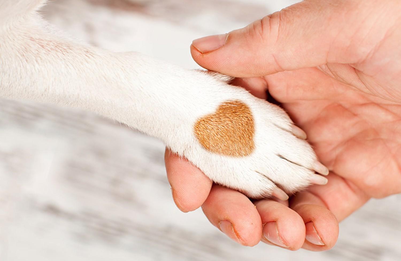 Segíts a kutyádnak megszabadulni  a méreganyagoktól