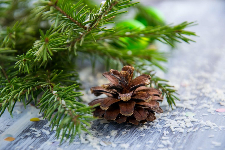 A fenyő második és harmadik élete - - avagy a karácsony illatáról nem kell lemondani