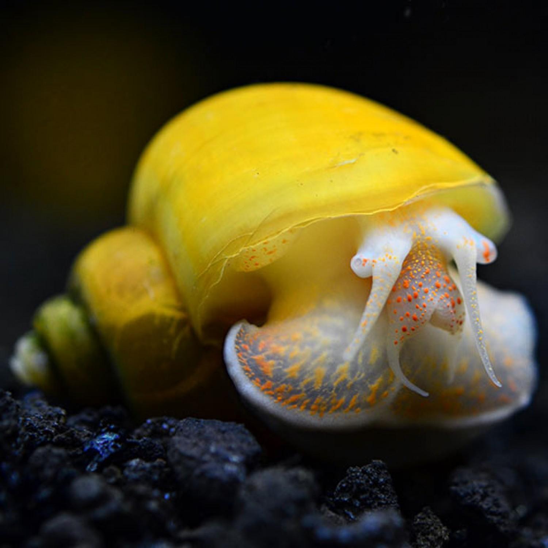 Meghatározták az Európából száműzendő invazív fajok listáját