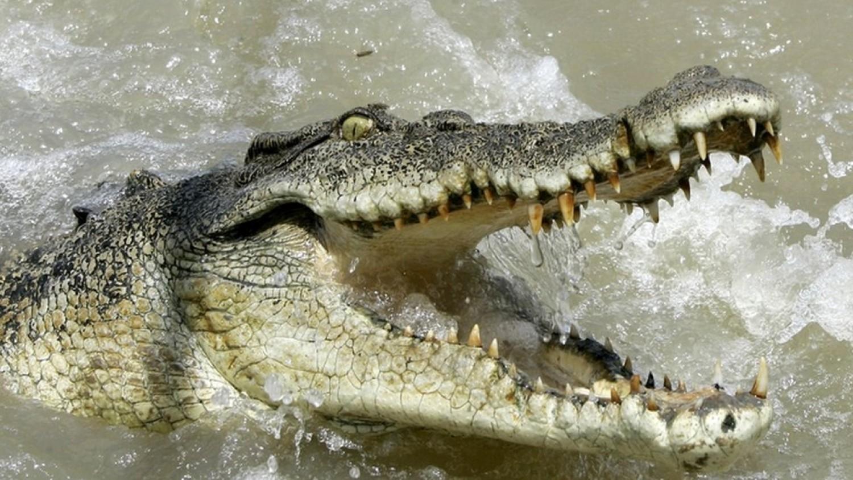 Két krokodilt öltek le eddig emberi maradványok után kutatva