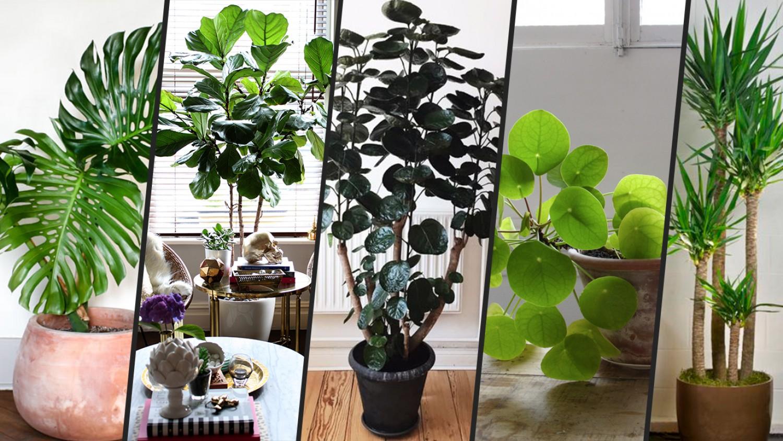 Feng shui és a szobanövények- Használd ki a bennük rejlő lehetőséget!