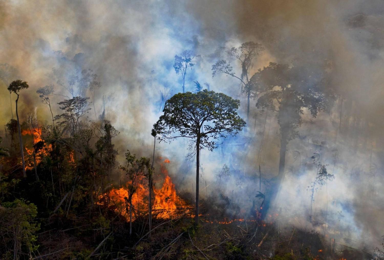 Több mint négymillió hektárnyi őserdő veszett oda tavaly a trópusokon
