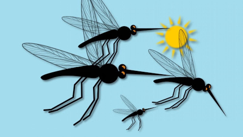 Országszerete folytatódik a szúnyoggyérítés