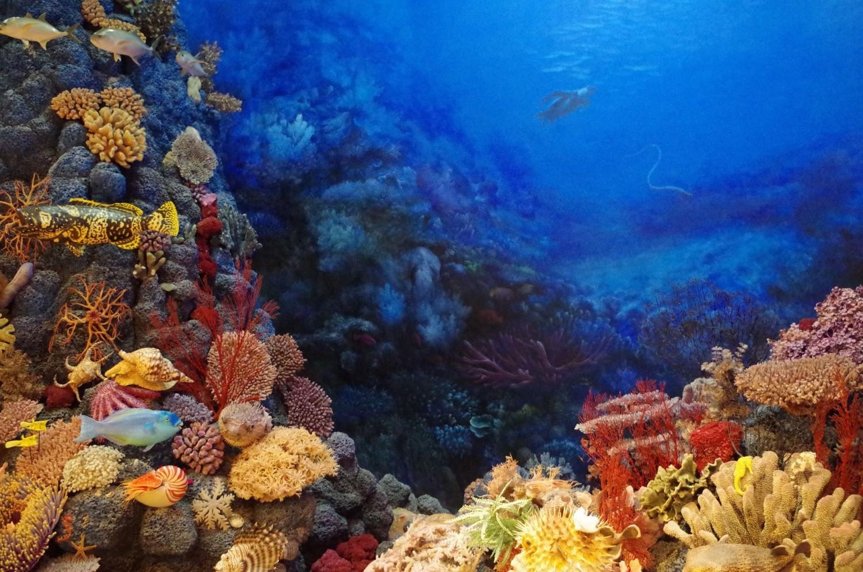 Elindították a világ első műholdas korallzátony-figyelő rendszerét