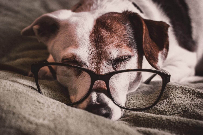 Az időskori demencia a kutyáknál is előfordul