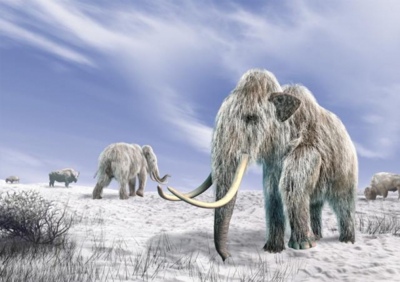 Kétszer is körbesétálhatta volna a Földet élete során egy ősi gyapjas mamut