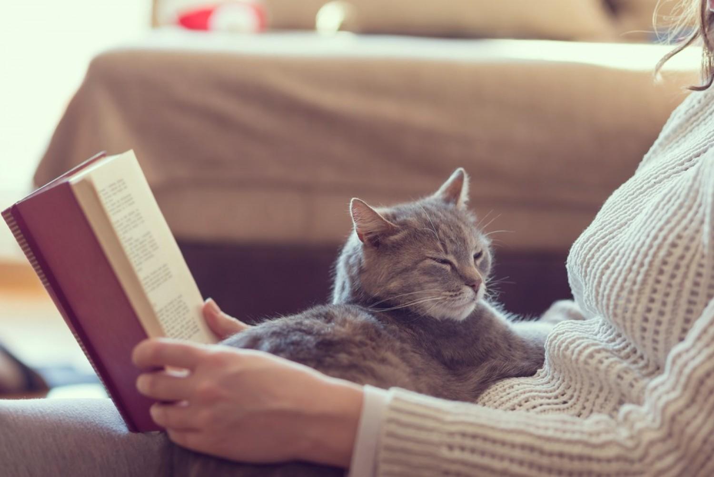 Ezért ül a macska mindíg oda, ahol fáj valamid!