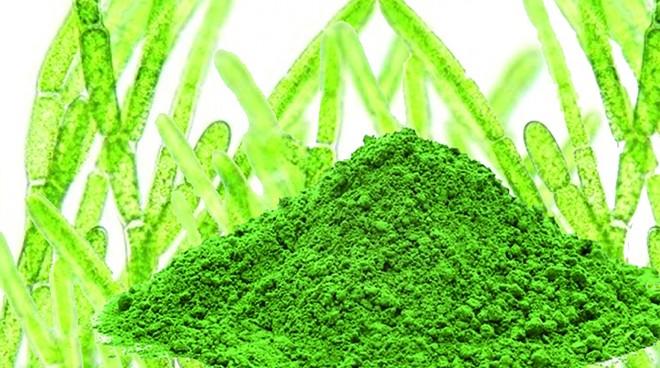 """Alga a zöld """"vér"""""""