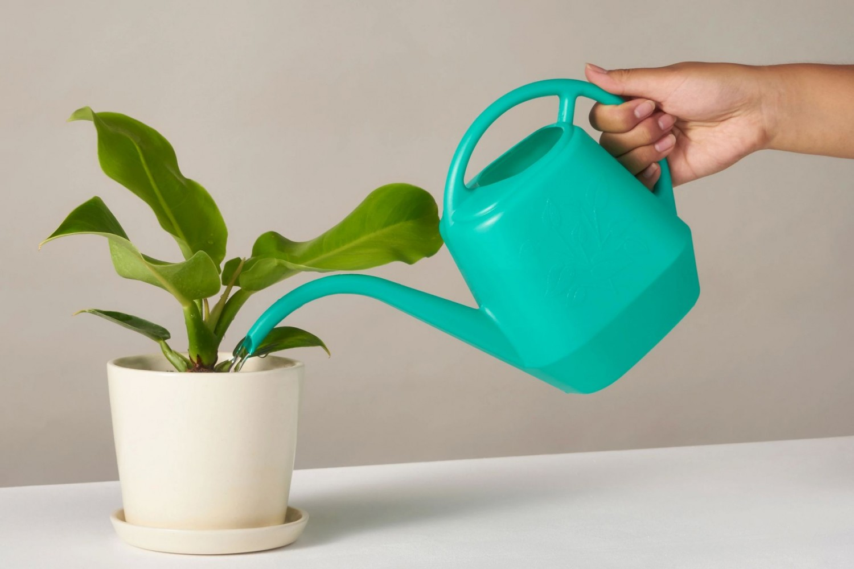 Ezzel locsold télen a szobanövényeidet, hogy egészségesek maradjanak