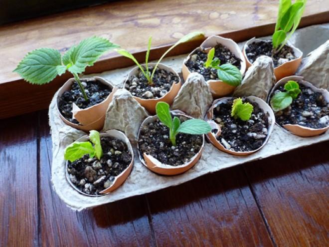 Bámulatosan életerős palántáid lesznek, ha tojáshéjba ülteted a magokat!