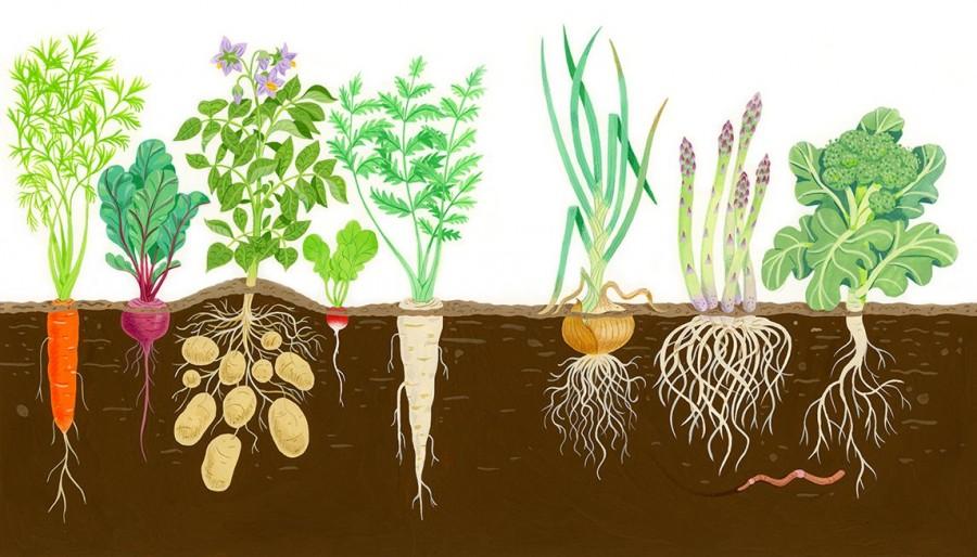 Szeret? Nem szeret? Itt a növénytársítási kisokos!